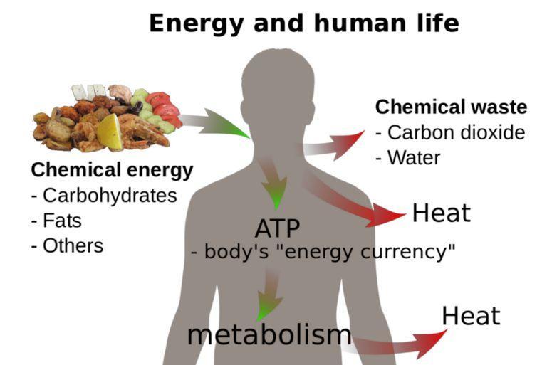 biology_thermodynamics-584ef5785f9b58a8cd3da04e